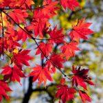 Herbst - Zeit für Entspannung