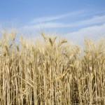 Landleben und Burnout